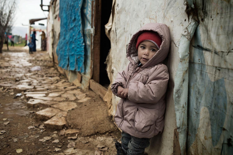 Blond syrians 1